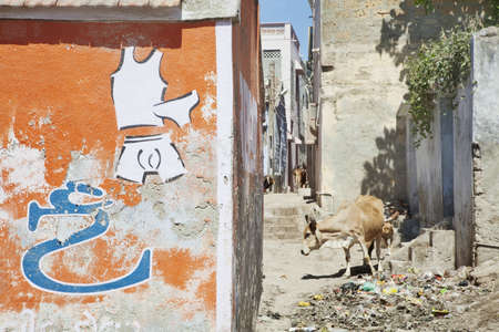locals: Dwarka Roadtrip  Landscape in the back alleys of Dwarka where the hindu symbolic animal, the scacred cow feeds by savanging with street road dogs among the rubbish and litter left by locals and tourists  Stock Photo