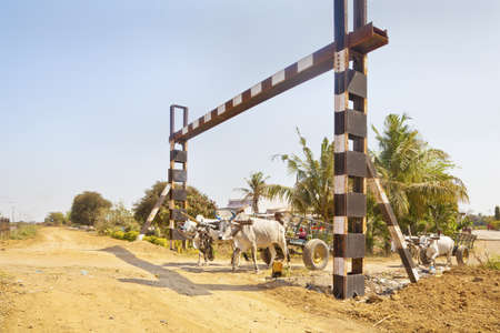 A pair of Bullock carts the local infrastructure risk danger on the approach to an unmanned rail crossing passing by a hinterland village on March 1, 2013 in Gujarat india