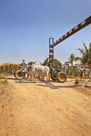 bullock: Bullock carts the local infrastructure risk danger and cause congestion on the approach to an unmanned rail crossing passing by a hinterland village on March 1, 2013 in Gujarat india