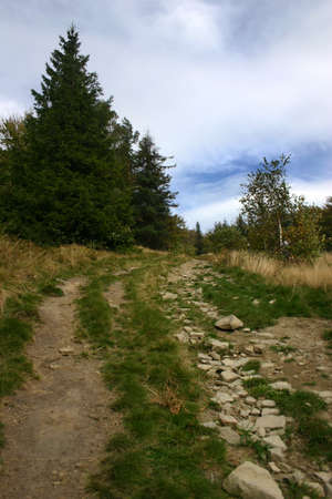 Path in polish mountains