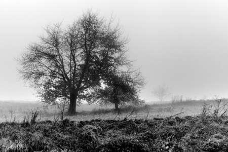 Tree in autumn foggy morning. photo