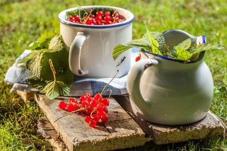 redcurrant: Redcurrant in a ceramic container of green grass.