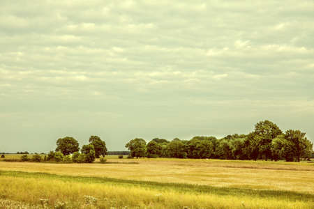 lomography: Vintage image cultivated fields of grain and rapeseed.