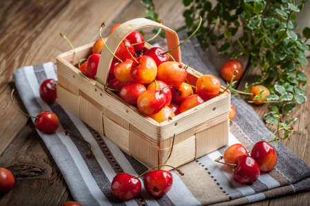 vitamin rich: Freshly harvested cherries in a wooden basket.
