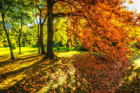 Beautiful colorful autumn leaves in the city park.