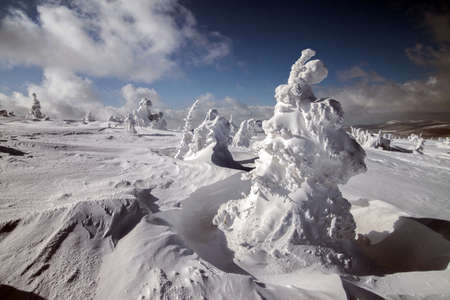 hoarfrost: Frosty winter. Fantastic snow figures on trees. Stock Photo