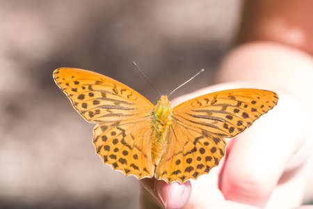 larval: Orange butterfly on human hand. selective focus, shallow DOF