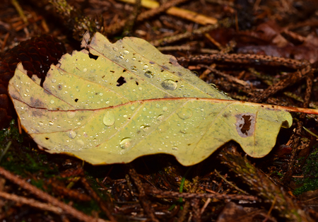 skirts: yellow leaf with raindrops
