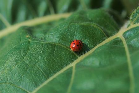 ladybird close up Imagens