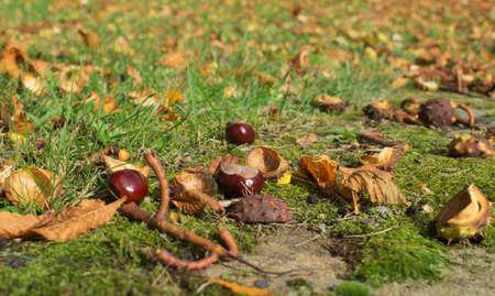 Kastanien auf dem Boden