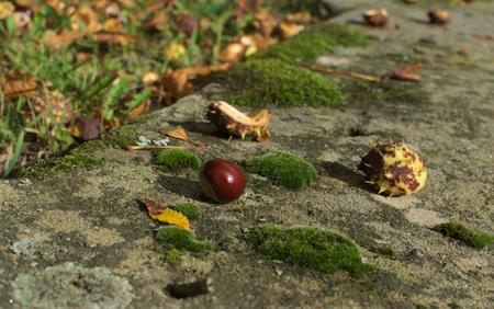 open floor plan: chestnut on the ground