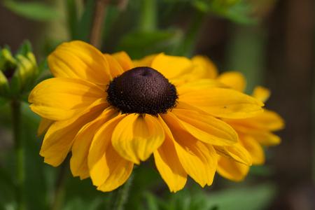 bee on flower: Echinacea