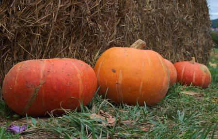 autumn colour: pumpkins on grass Stock Photo