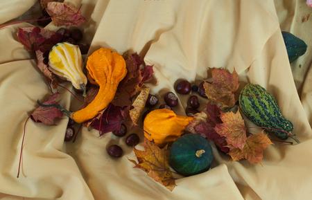 autumn colour: fall decorating