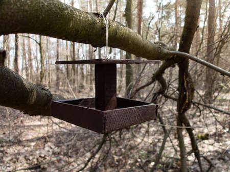 Handmade bird feeder hung on the tree branch