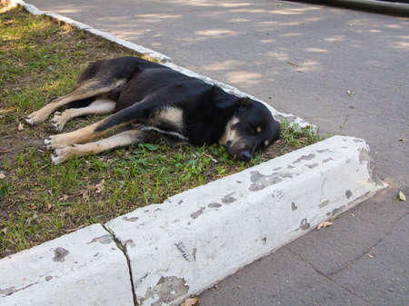 Dog sleeping on the grass spot at green zone