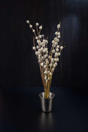 A bouquet of fluffy willow branches Salix gracilistyla in the metal-bucket cup