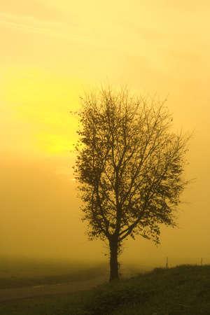 leafless tree in a foggy orange sunset