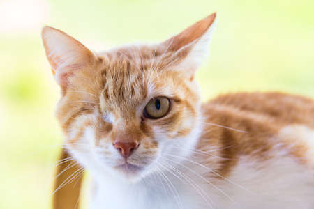 one eye: Injured cat with only one eye