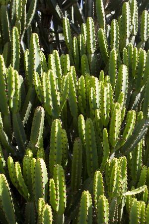ambiente: cactus
