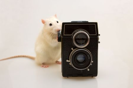 White small rat with the old camera