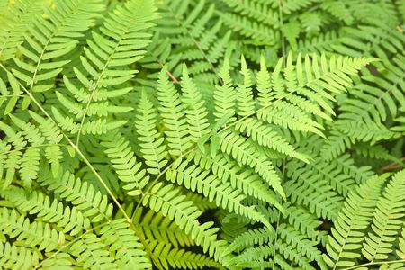 Fern leaves in an early autumn close up