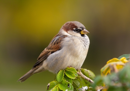 Portrait of a sparrow on a branch close up