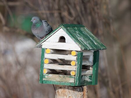 pigeon sitting on the roof of a wooden house Stock Photo - 18510753