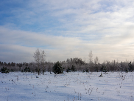 landscape on a cold winter day at the edge of the forest