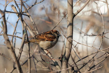 portrait of a sparrow on a branch of a bush