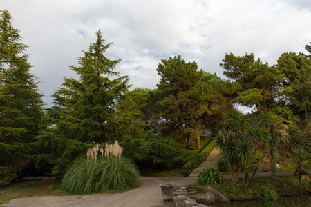 landscape with conifers in the southern park