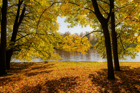 sunny landscape with trees in the autumn park