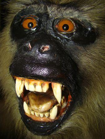 Gorillas Gorilla the largest representatives of group of primates