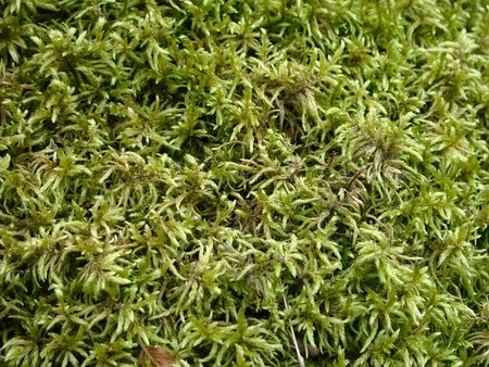 dampness: moss growing on the ground, after a rain - a structure
