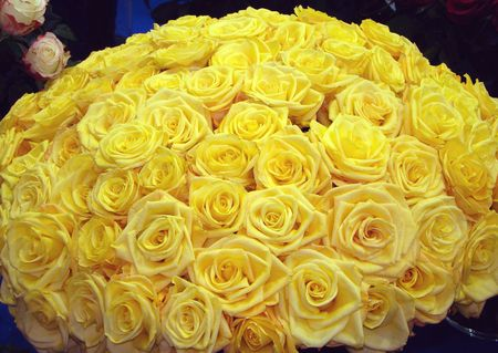 The big bouquet from set of yellow roses