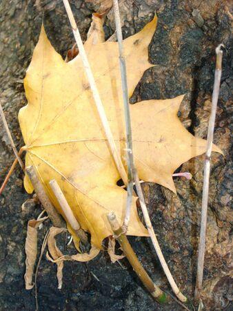 proceeds: El follaje ca�do y los j�venes fugitivos en ???? un tronco de un viejo �rbol. La vida producto.