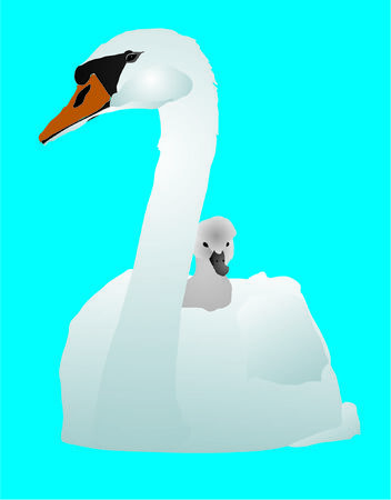 White swan with a baby bird on a pond Illustration