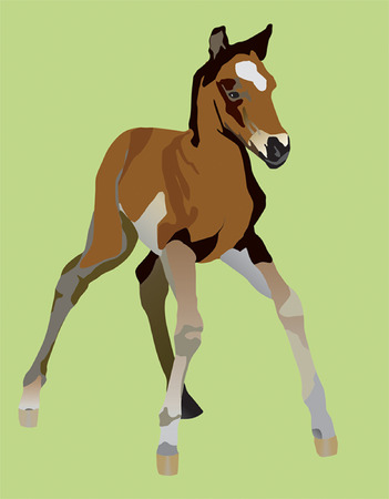 clumsy: clumsy little a foal yet can not be on the long feet