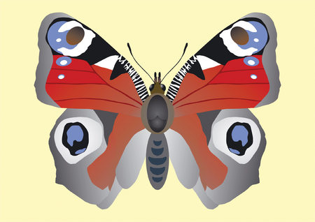 inachis: Peacock eye of Inachis io beautiful butterfly with spots as eyes on wings