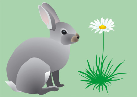 paskha: easter grey hare on to the meadow near the flower of camomile
