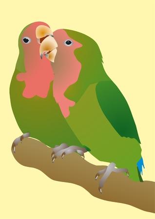 Roze-gecontroleerd papegaaien Agapornis roseicollis trouw wives Vector Illustratie