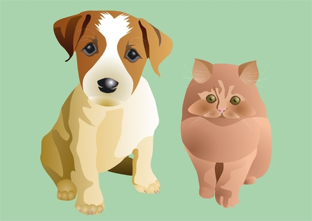 expectation: Puppy and kitten in expectation of new owners