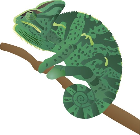 a chameleon sits on a branch and tracks down a booty