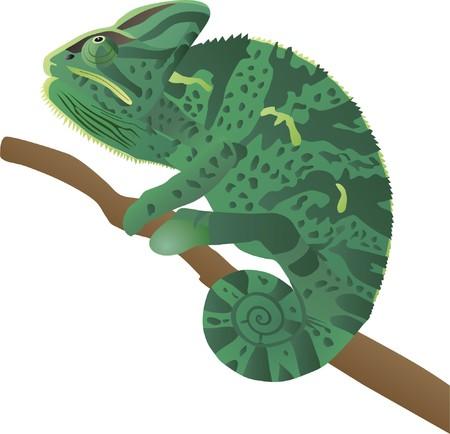 chameleon lizard: un camaleonte si siede su un ramo e le tracce di un bottino