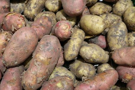 tuberosum: Potato tuber or nightshade (Solanum tuberosum), - tuberous herbaceous plant food Stock Photo