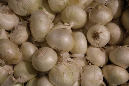 maltose: Onion (allium cepa) - herb vegetable crop
