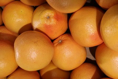 La toronja (Citrus paradisi) - el fruto de un árbol de hoja perenne subtropical
