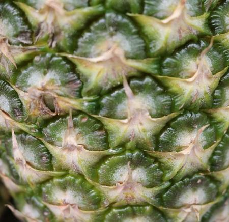 viscosity: Pineapple - herbaceous plants Bromeliads of America