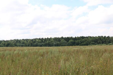 field with a variety of herbs and forest in the distance and the sky Stock Photo