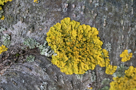 Lichens on a tree branch in the forest Stock Photo